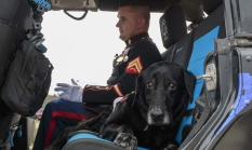 CENA Military-Dog1