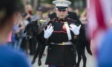 CENA Military-Dog2