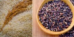 ĂN UỐNG các loại gạo